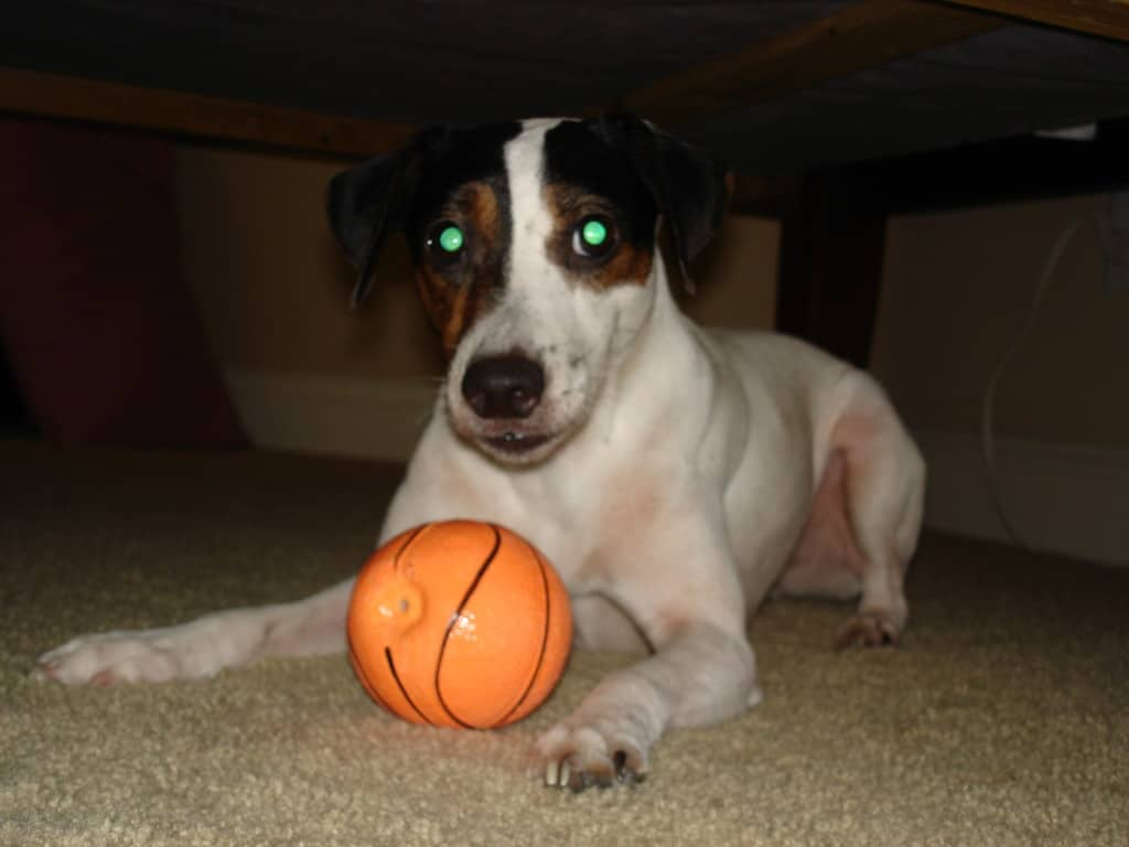 2008 Luther with Basketball (4)