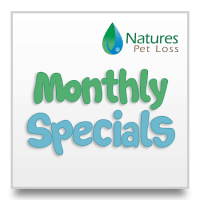 Monthly Specials & Discounts